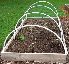I don't think a raised vegetable bed is complete without hoops. They provide a neat, removable/interchangeable framework for: plastic sheeting to create greenhouse conditions for germinating seedlings and to guard against cold weather and punishing downpours netting to keep cats and dogs from digging and birds from …