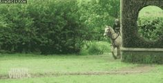 10 Horses Who Forgot How To Horse | this is something Scout (one of the horses I ride) would do. He's already ran through tree branches that were high enough so that they didn't hit him or knock me off but they still hit me and I got several bruises and scratcher from it... sigh...