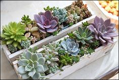 Small Succulents, Succulents In Containers, Container Plants, Planting Succulents, Container Gardening, Succulent Bowls, Succulent Centerpieces, Rock Garden Design, Succulent Landscaping