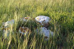 Diamond B Ranch - Cheyenne, Wyoming