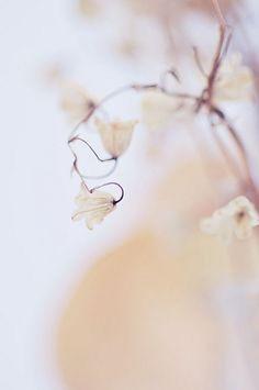 **Bokeh Flowers