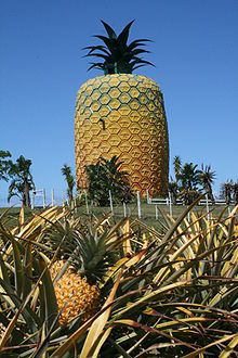 """pizzzatime: """"saltthought: The Big Pineapple, between Port Alfred and Bathurst on the in the Eastern Cape, South Africa """" Kansas City, Big Pineapple, Port Elizabeth, Out Of Africa, Roadside Attractions, Tropical Fruits, Places Of Interest, Sunshine Coast, Africa Travel"""