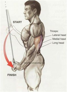 Top 10 Triceps Exercises And Their Benefits