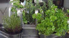 La congélation est le meilleur moyen pour ne pas altérer le goût de vos aliments. Je conserve mes herbes fraîches dans mon congélateur afin de me simplifier la vie. Basilic, menthe, coriandre, ci