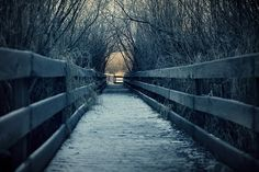 Bridge / path