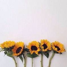 source of happiness Flower Backgrounds, Wallpaper Backgrounds, Aesthetic Wallpapers, Aesthetic Iphone Wallpaper, Sunflower Photography, Flower Art Drawing, Sunflower Pictures, Fb Cover Photos, Sunflower Wallpaper