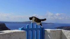 Les chats de l'ile de Santorin - The cats of Santorini Island from Philippe LAVAUX on Vimeo. Kittens Cutest, Cats And Kittens, Cute Cats, Funny Cats, Greece Tours, Greece Travel, Santorini Island, Santorini Greece, Amazing Animal Pictures