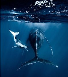 """""""I had a totally unreal moment when a 4 meter humpback calf, about 2-3 months old, was going straight towards me."""""""