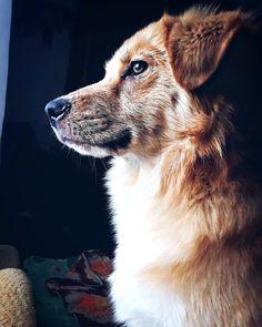 Бусяш Серьёзный собакен ) #кострома #весна #апрель #собака #мойсобакен #собакадругчеловека #инстафото #инстагуд #инстасобака #vcso #vcsocam #vcsolife #vcsogood #vcsorussia #dog #dogs #бусяш