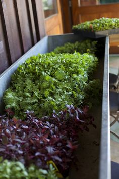 the micro-green trough