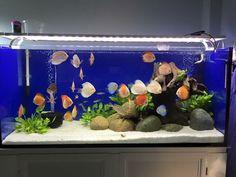244 best aquarium design images aquarium design fish tanks aquarium rh pinterest com