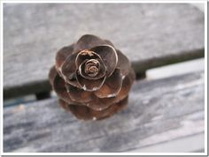 Pine Cone or Woody Rose?