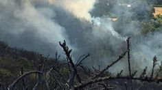 Smoke pours from burning trees in the hills above Governors Bay. Bald Eagle, Rage, Trees, Smoke, Tree Structure, Smoking, Wood, Acting