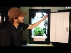 Hydroponic Grow Box works best! Growing kit by Supercloset - YouTube