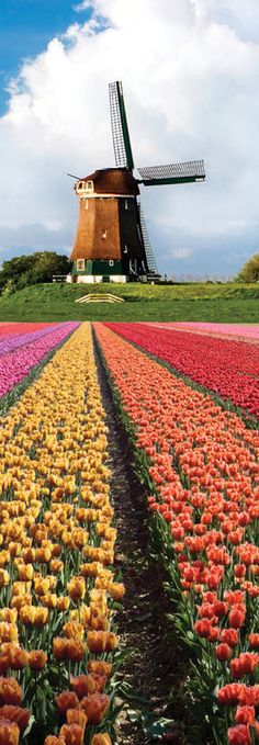 Keukenhof bulb fields - Keukenhof Gardens - Lisse | Netherlands