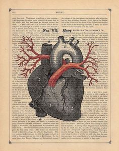 anatomical heart with pulmonary vessels on recycled print paper