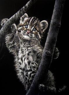 Temminks cat or Asian golden cat - scratchboard art by Lesley Barrett