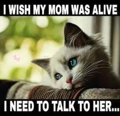 Cats complaining first world cat problems first world problems hall of fame memes sleep sleeping tired Mom I Miss You, Mom And Dad, I Miss You Meme, Phrase Choc, Film Maker, Cat Memes, Funny Memes, Stupid Memes, Stupid Funny