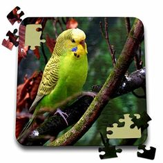 Lovely Green Parakeet Budgie - Jigsaw Puzzle