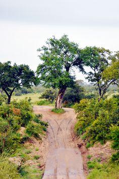 On Safari, South Africa | lark&linen