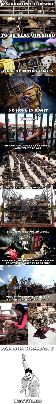Faith in humanity restored! The Cat/dog meat festival in china and neighboring areas is SICK! Spread the word, sign petitions!