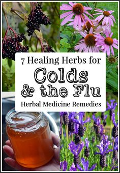 Herbal Medicine Remedies: 7 Healing Herbs for Colds and the Flu and how to use them.