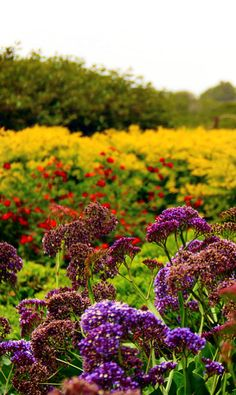 Wild flowers . Israel