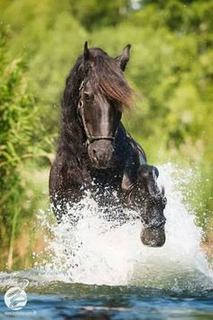 """"""" Through The Water! """""""