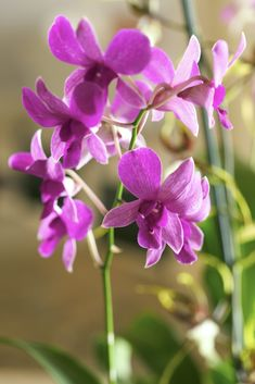 Orchids are known for their beautiful flowers.