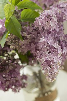 Lilac...smell glorious!! My mom has a bunch in her yard. They are gorgeous.