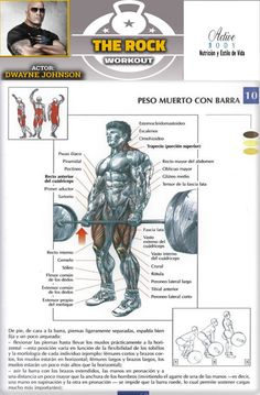 Peso muerto con barra Basic Gym Workout, Gym Workout Chart, Squat Workout, Toning Workouts, Fit Board Workouts, Exercises, Gym Plans, Personal Gym, Shoulder Workout