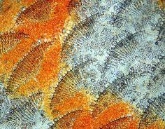 Scaglie di pesce