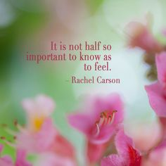 Beautiful chestnut blossoms with quote by Rachel Carson. #wonder #photography #flower #fleur #Rebekah West