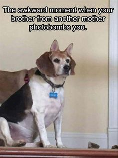 Who've Been Photobomb photo