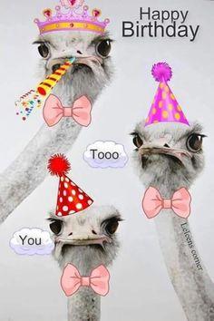 Happy Birthday to You. - Happy Birthday Funny - Funny Birthday meme - - Happy Birthday to You. The post Happy Birthday to You. appeared first on Gag Dad. Happy Birthday Animals, Happy Birthday Pictures, Happy Birthday Sister, Happy Birthday Messages, Happy Birthday Funny, Happy Birthday Quotes, Happy Birthday Greetings, Animal Birthday, Birthday Wishes