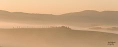 Tuscany, mist, silhouette  This was taken along one of the white roads, not far from San Quirico d'Orcia