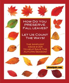 How to preserve Autumn leaves? Let us count the ways. So many and so simple Rock Crafts, Crafts To Make, Crafts For Kids, Tree Crafts, Flower Crafts, Green Nature, Beach Crafts, Nature Crafts, Green Trees