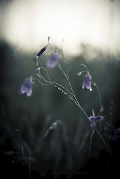 Printler Not Found One Summer, Summer Nights, Four Seasons, Erika, Photo Art, Flower Arrangements, Flora, Nature, Plants