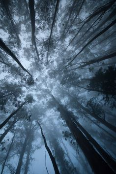 лес - вид снизу