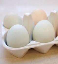 Is an Egg White Omelet Healthier Than One Made From Whole Eggs?-Visit our website at http://www.clubfitfortlauderdale.com for a FREE TRIAL PASS