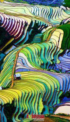 Xách balo và đặt chân lên Sapa những ngày đầu đông - http://www.iviteen.com/xach-balo-va-dat-chan-len-sapa-nhung-ngay-dau-dong-2/  Bạn là người yêu thích sự bình yên, tĩnh lặng hay trong bạn là cả một trái tim ưa phiêu lưu mạo hiểm. Hãy thử tìm những cảm giác thú vị ấy với hành trình đặt chân lên Tây Bắc, dĩ nhiên Sapa chính là điểm đến đầu tiên.    Chưa bao giờ những cung đường, nh