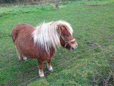 Cute horse i saw!