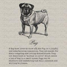 Pug description