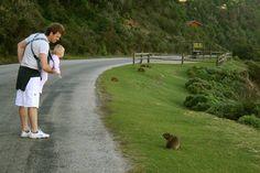 Tsitsikamma National Park Tsitsikamma National Park, Knysna, Cape Town, Wilderness, South Africa, Westerns, Activities For Kids, National Parks, Children Activities
