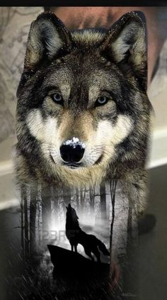64 Ideas for tribal dragon tattoo designs wolves Wolf Images, Wolf Photos, Wolf Pictures, Wallpaper Lobos, Wolf Wallpaper, Animal Sleeve Tattoo, Animal Tattoos, Tribal Sleeve, Sleeve Tattoos