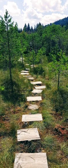 Mohos Peat Bog is a wonder of volcanic activity in which water, wildlife, and some wood steps aret the recipe for an amazing experience. Wood Path, Wood Steps, Water Experiments, Walk The Earth, Walk On Water, Carnivorous Plants, Pine Forest, Small Plants, Romania