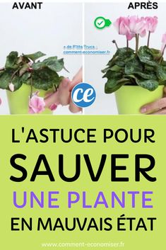 L'astuce pour sauver une plante d'intérieur en mauvais état.