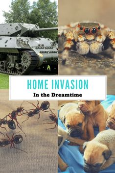 This month's column is all about our home's being invaded, please read to find out more… Lizards, Snakes, Military Tank, Dream Symbols, Dream Meanings, Dream Interpretation, Ants, This Is Us, How To Find Out