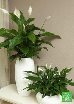 Best Indoor Plants, Outdoor Plants, Indoor Garden, Garden Pots, Decoration Plante, House Plants Decor, Deco Floral, Interior Plants, Interior Design