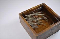 3-D painted fish in layered resin: Riusue Fukahori